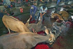 Pemotongan sapi di sebuah RPH di Makassar, Sulawesi Selatan. (Foto:voanews/reuter).