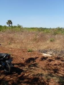 Lahan kosong di Kota Kupang berwarna cokelat muda seperti ini di musim kemarau (eddy mesakh)